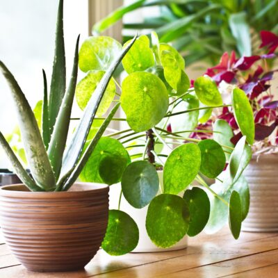 How to Keep Your Indoor Plants Happy and Healthy
